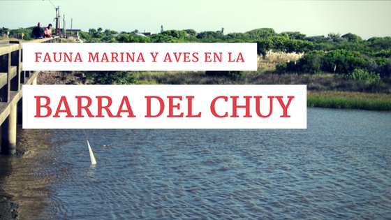 Fauna marina y aves en la Barra del Chuy